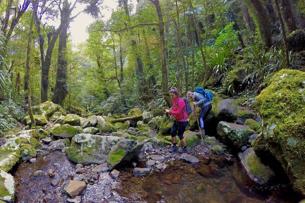 Lamington National Park Walks