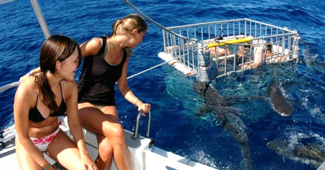 Waikiki Shark Cage Diving