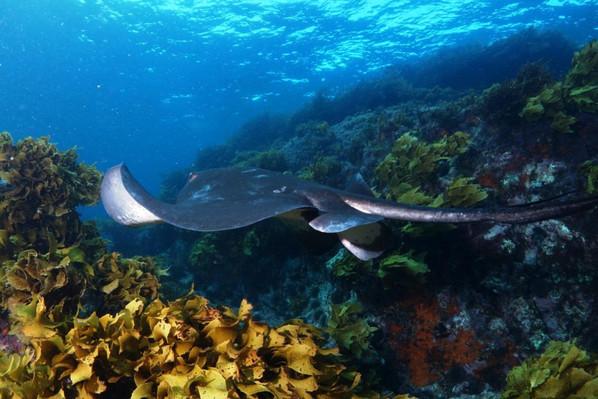 Bay of Islands scuba diving discounts