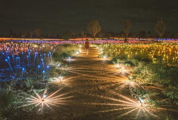 Fields of Light Uluru