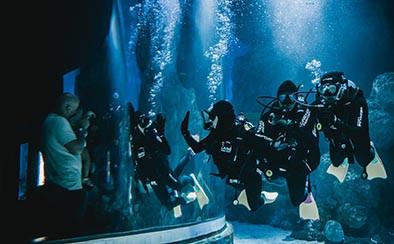 Cairns Aquarium Shark Dive Experience