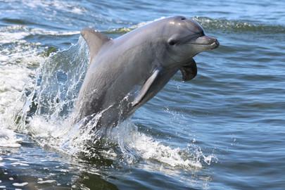 Dolphin Island Adventure from Mandurah