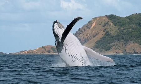 Byron Bay Whale Watching Tour