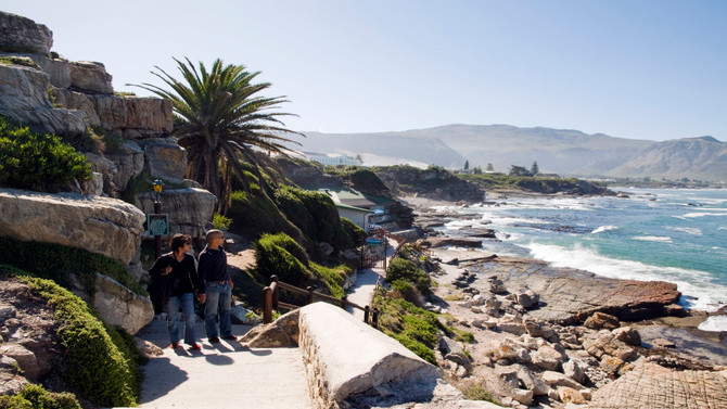 Whale Tour - Cape Town - July to August