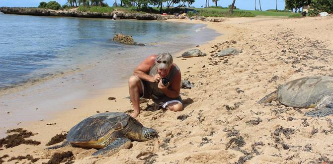 Oahu Turtle Tour