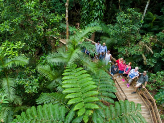 Daintree Tour from Cairns