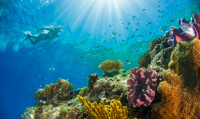 passions-of-paradise-snorkel