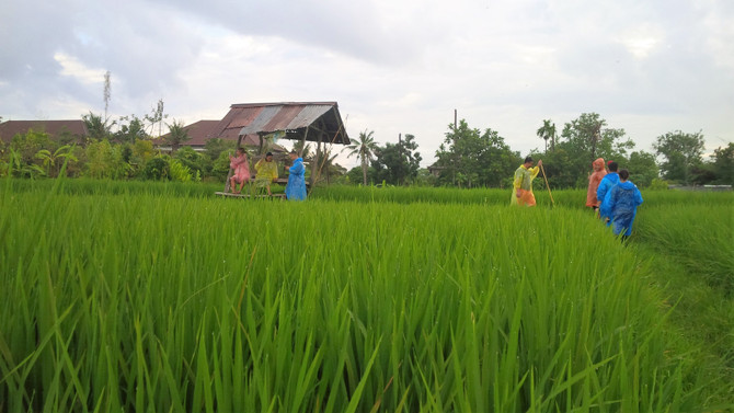 rice field with a local