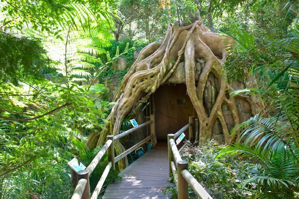 Springbrook & Tamborine Rainforest Tour Queensland