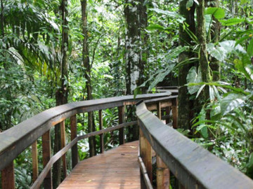 Cinco Ceibas + Adventure Park from San José