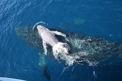 VIP Brisbane Whale Watching Adventure