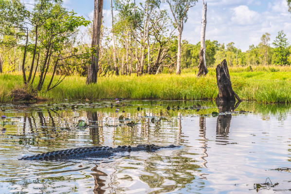 Matt Wright Crocodile Tour