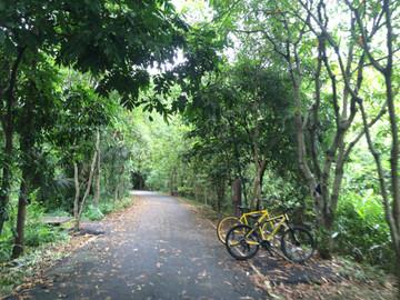 Bike Tour of Bangkok's Green Lung