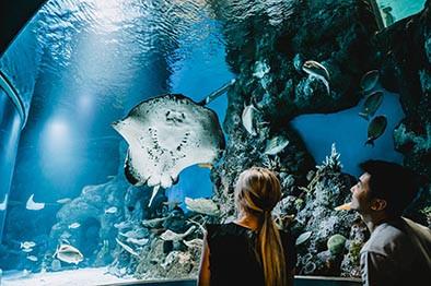 Cairns Aquarium Shark Dive Prices