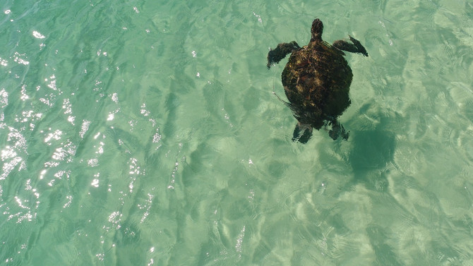 Moreton Island Marine Safari