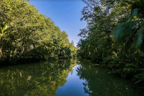 mangrove-costarica