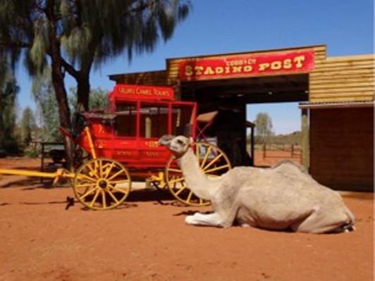 Uluru Camel Express Experience