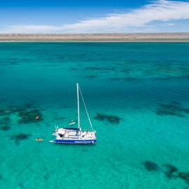 Ningaloo Whale Shark Swim & Eco Tour On A Catamaran (Shoulder Season)