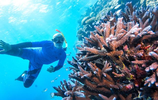 Reef Magic Cruises Discount