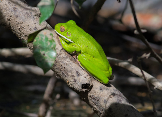 Daintree Afternoon and Nocturnal Tour
