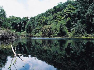 Tortuguero National Park from San José