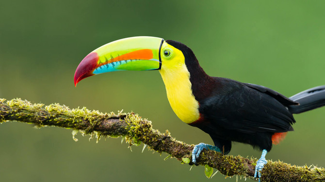 tucan expedition   7 day maniti expeditions iquitos tour