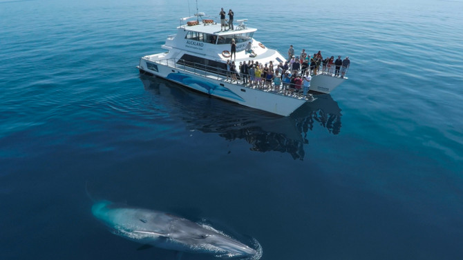 auckland whale and dolphin safari discounts