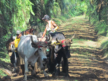 Quepos Cultural & Historical City Tour