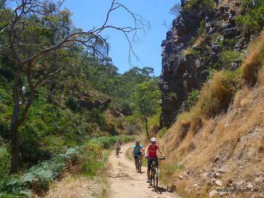 Lofty Descents Mountain Biking Tour
