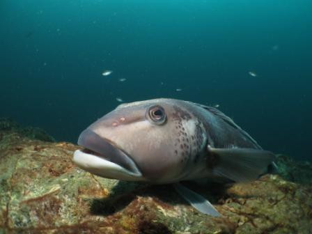 Canterbury diving sea life