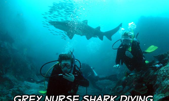 learn-to-dive-australia