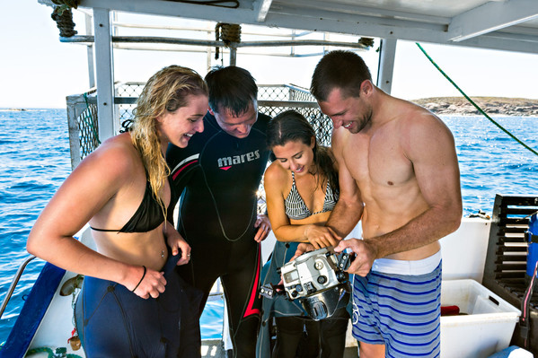 4 day, 3 night cage diving tour