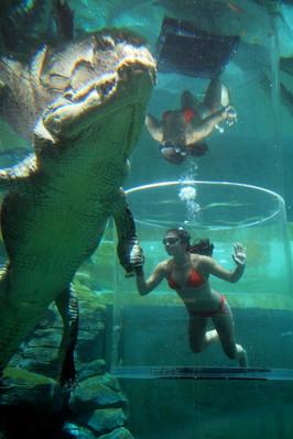 crocodiles darwin