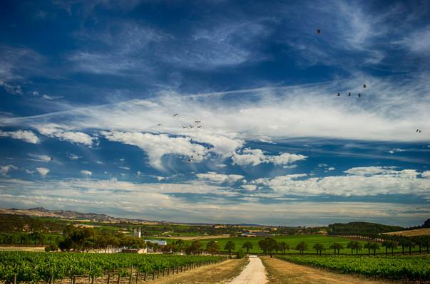 barossa valley wine tasting tours