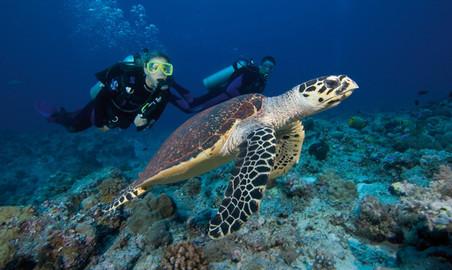 Solitary Islands - Discover Scuba Diving