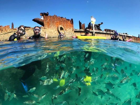Dolphin_Wild_Island_Cruises_snorkeling_Moreton_Island_lg (1).jpg
