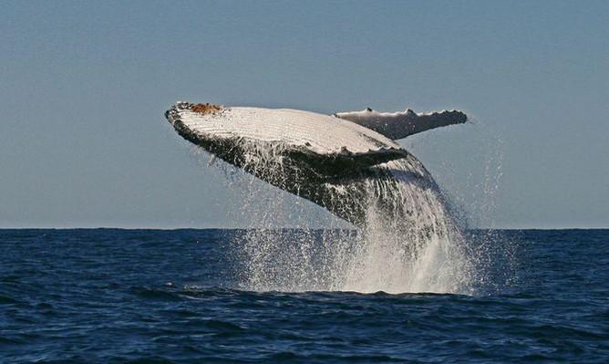 byron-bay-whale-watching-jump