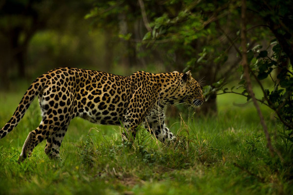 African wildlife safari deal