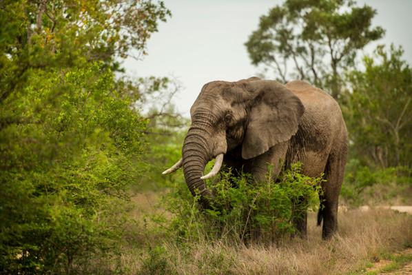 Elephant tour Johannesburg Africa