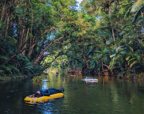 Daintree Rainforest Day Tour