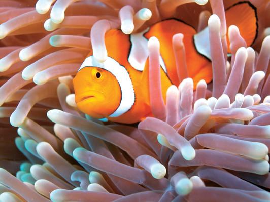 Green Island Reef Cruises
