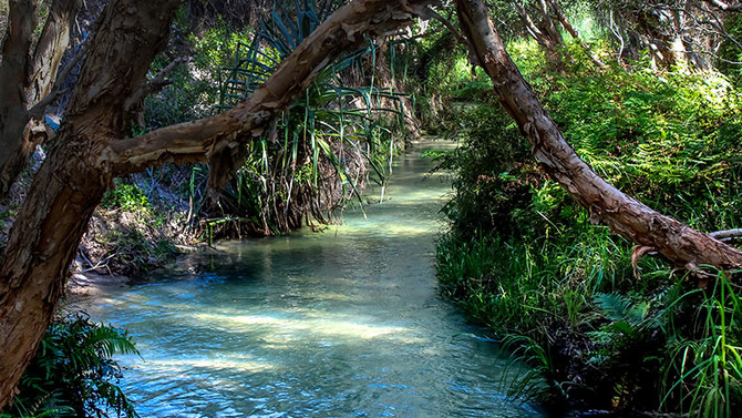forest tour Fraser Island deal