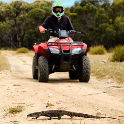Kangaroo Island Quad Bike Adventure South Australia