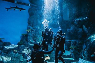 Cairns Aquarium Shark Dive Discount
