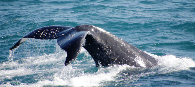 Whale Watch Cruise Gold Coast cheap