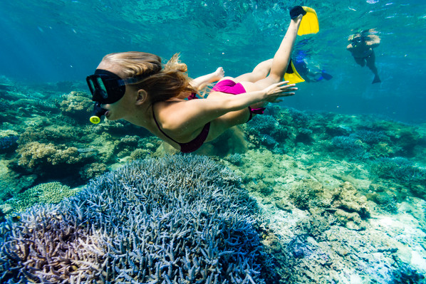 fiji snorkeling tour