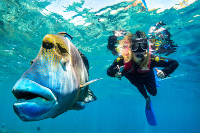 Reef Magic Cruises From Cairns to Marine World