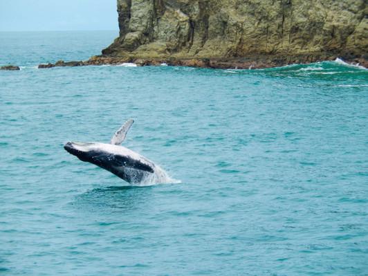 whale-wtaching-quepos