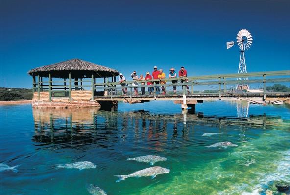 Monkey Mia Dolphin, Shark Bay World Heritage Area, Tourism WA, 112265-56.jpg