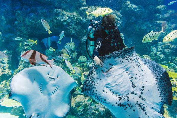Cairns Aquarium Lunch